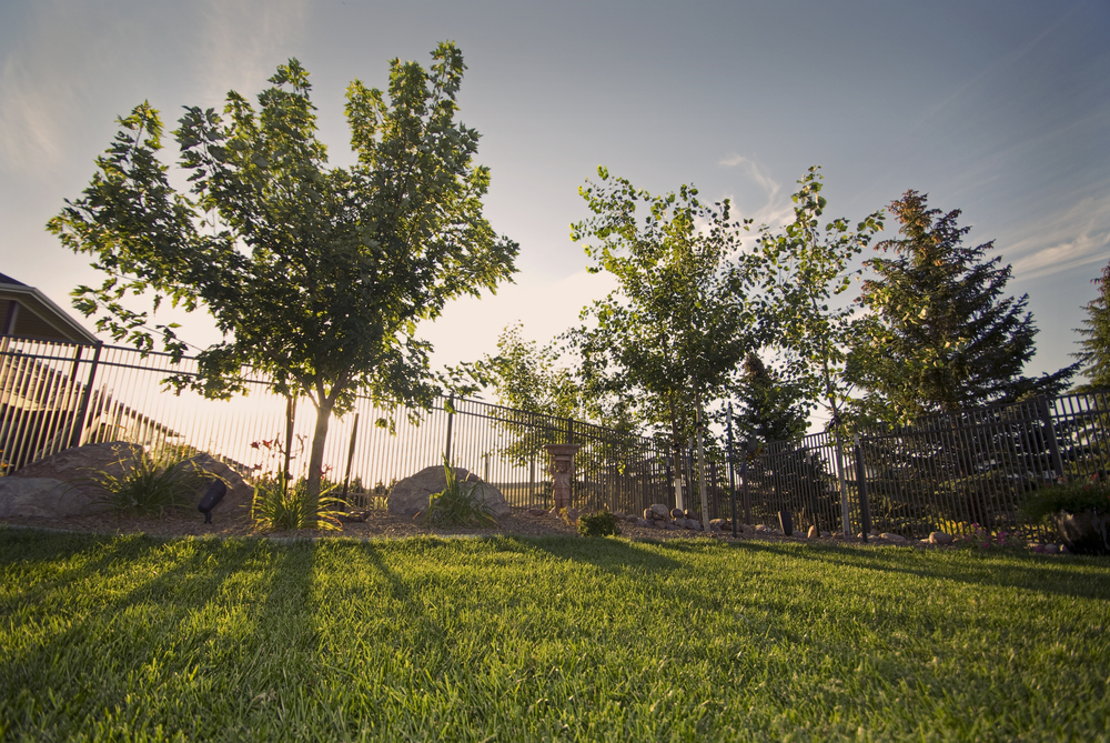 _ALE0215 trees.jpg