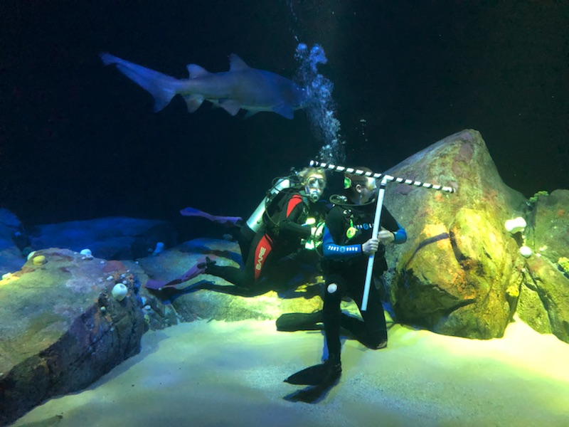 In the new Ocean Wonder's Canyon's Edge exhibit at the New York Aquarium  Photo Credit, Megan E. Weber, 2018