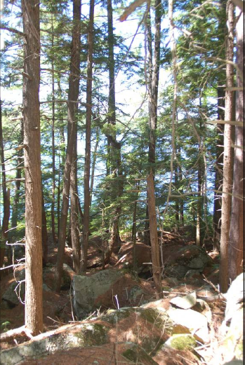The hemlock forest seen from the Headland Loop trail.                               Photo: Sarah P. Fuller