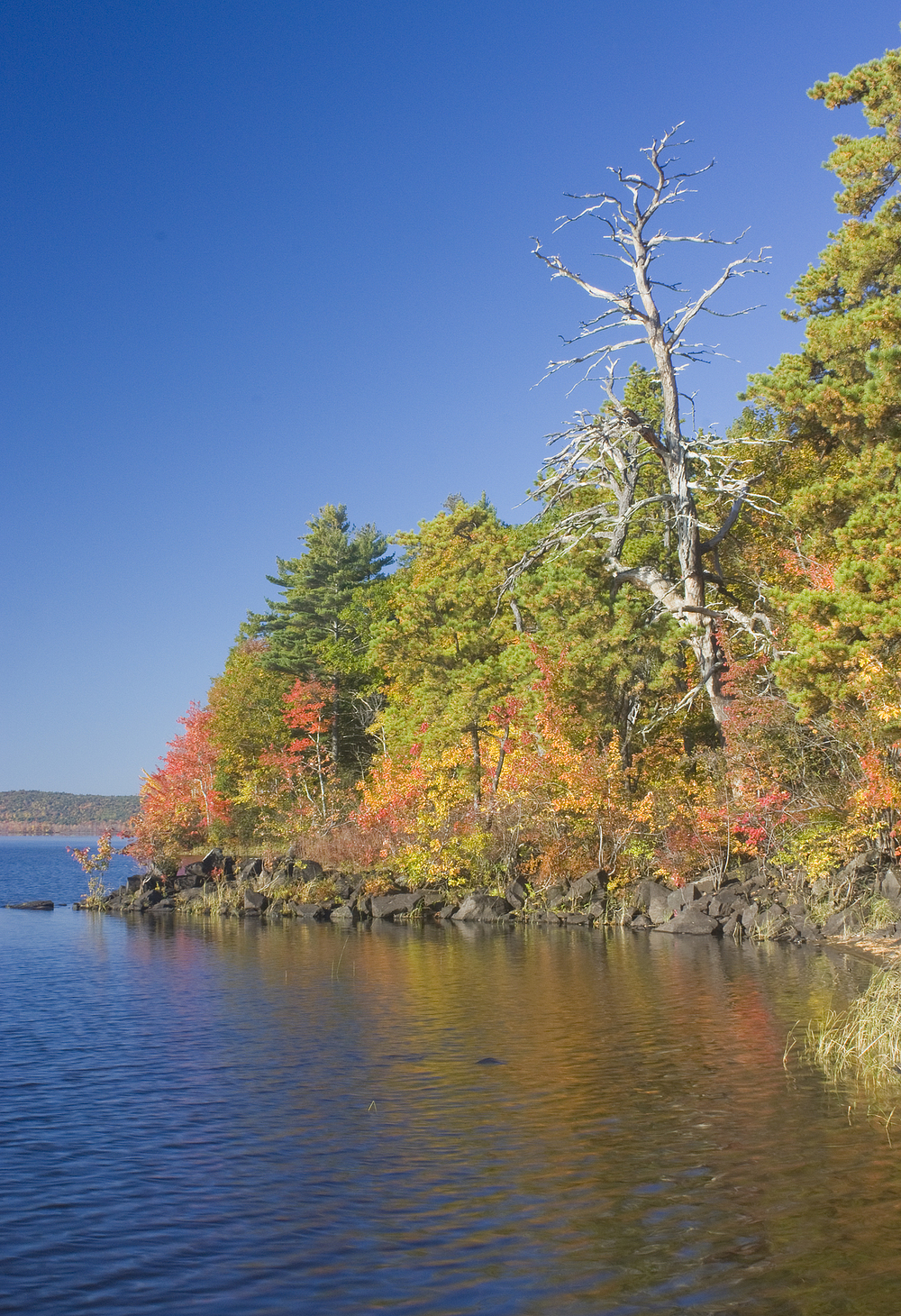 The stunning trees of Perkins Woods as seen from Androscoggin Lake.  Photo: Jane Davis