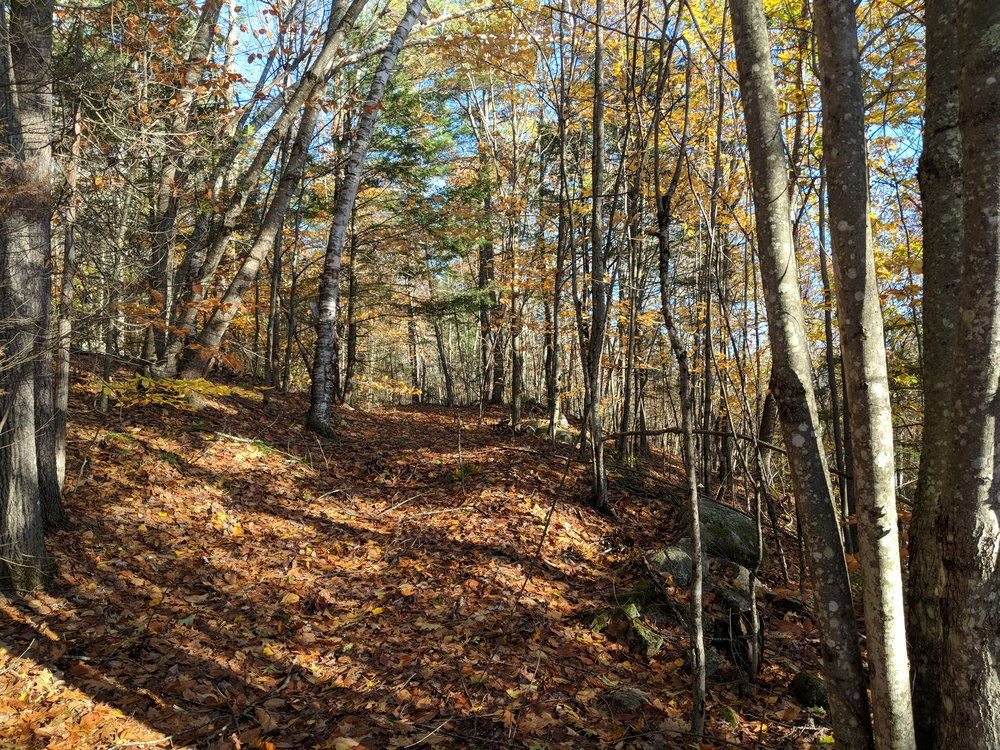 Ezra Smith Wildlife Conservation Area Trail in Fall