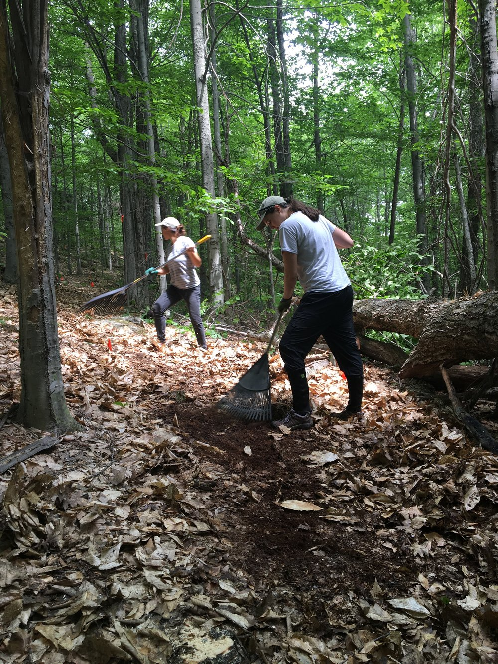 2017 Interns Building a New Trail on Mount Pisgah