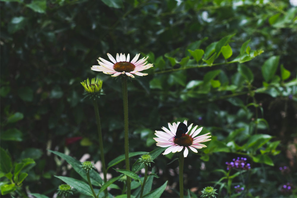 butterfly_15.jpg