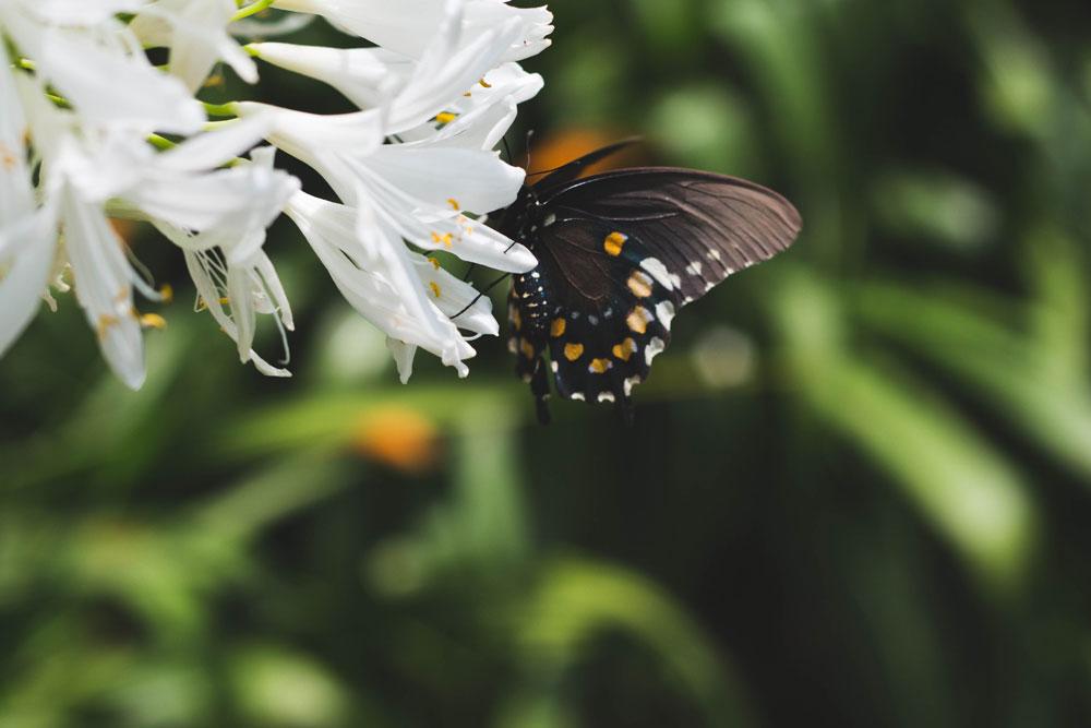 butterfly_8.jpg