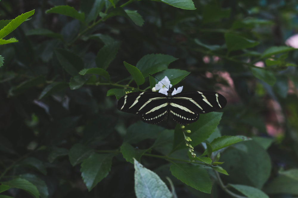 butterfly exhibit // santa barbara