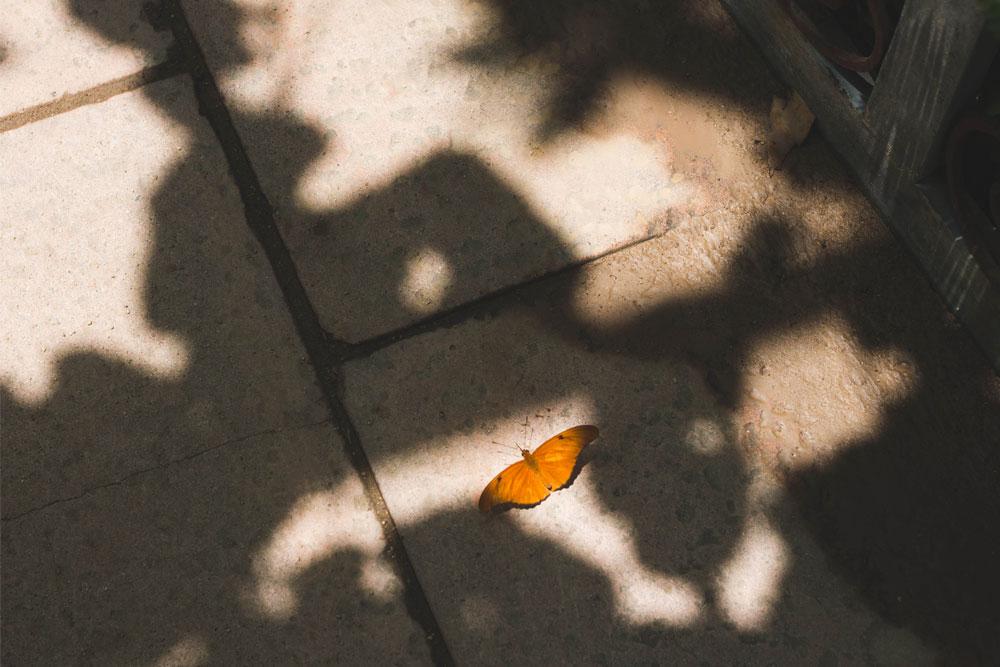 butterfly_16.jpg