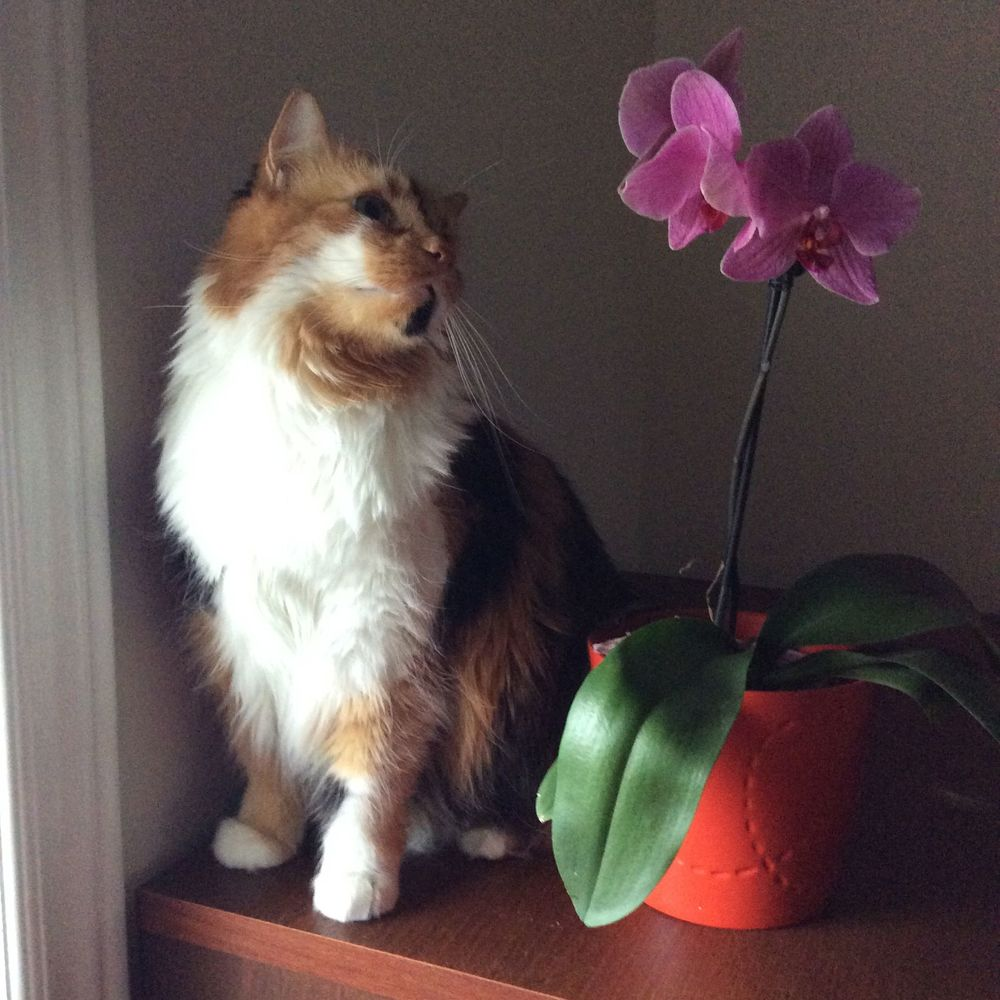 Ramona and Orchid- a portrait.