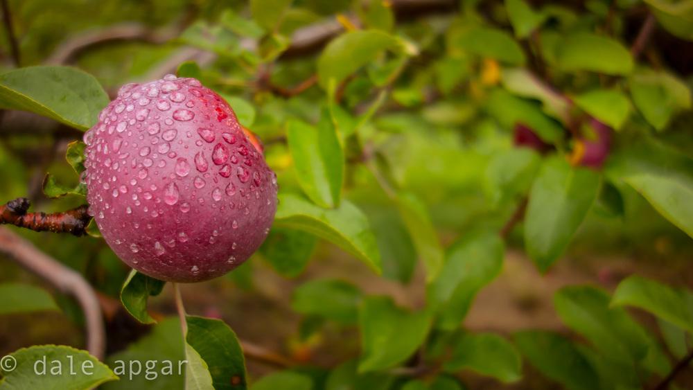 I love apple season in New England