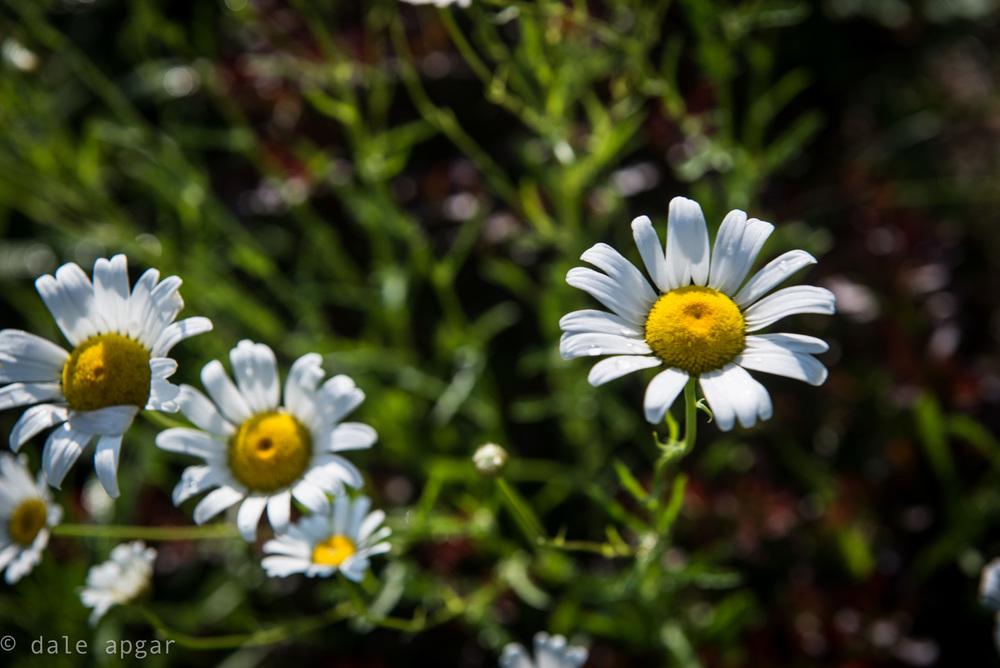 dale_apgar_vermont_2014_spring-11.jpg
