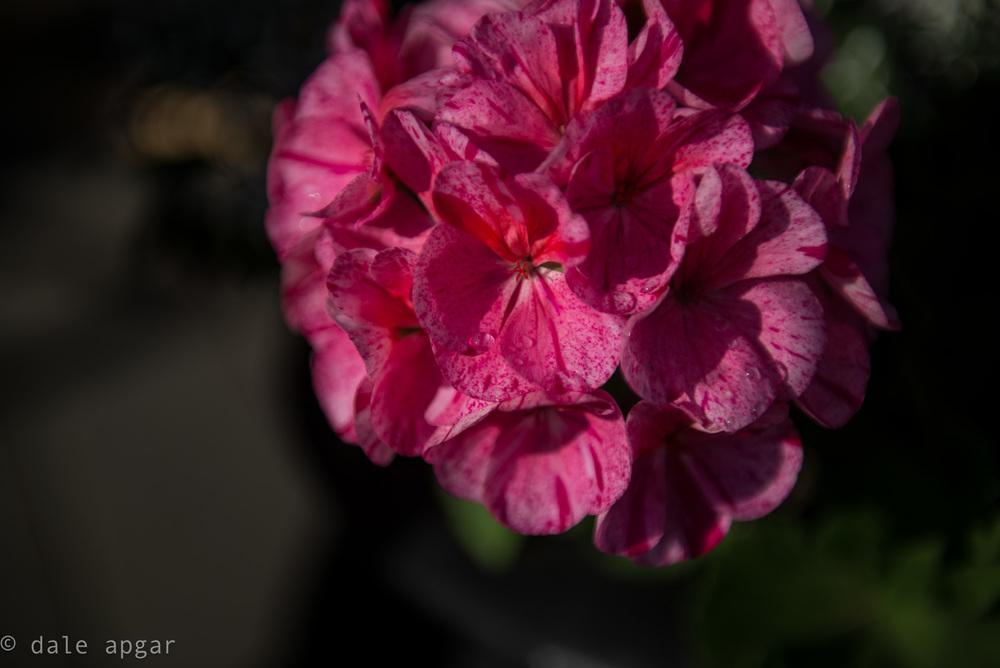 dale_apgar_vermont_2014_spring-13.jpg