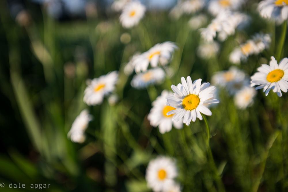 dale_apgar_vermont_2014_spring-19.jpg