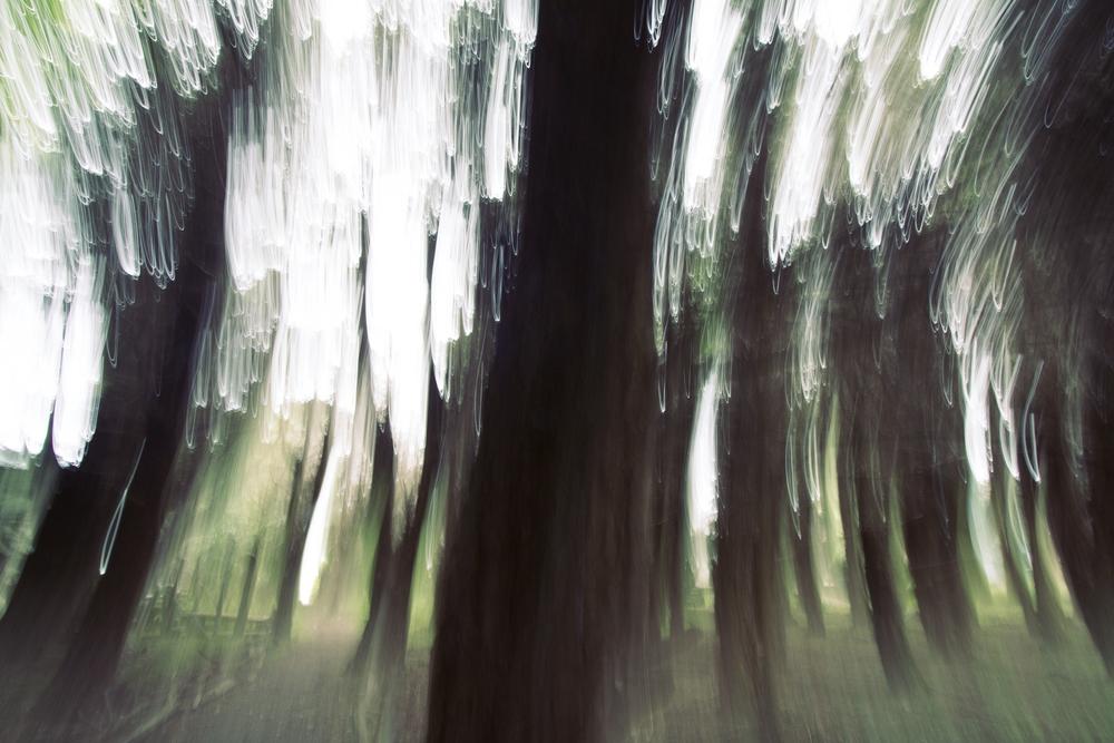 savary blur2.jpg