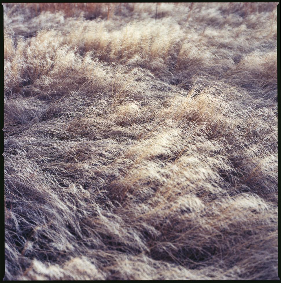 Grasslands#6.jpg