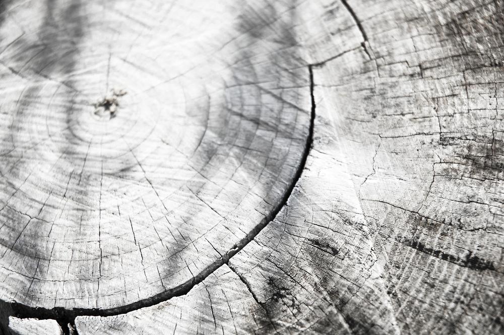 Log Detail 3.jpg
