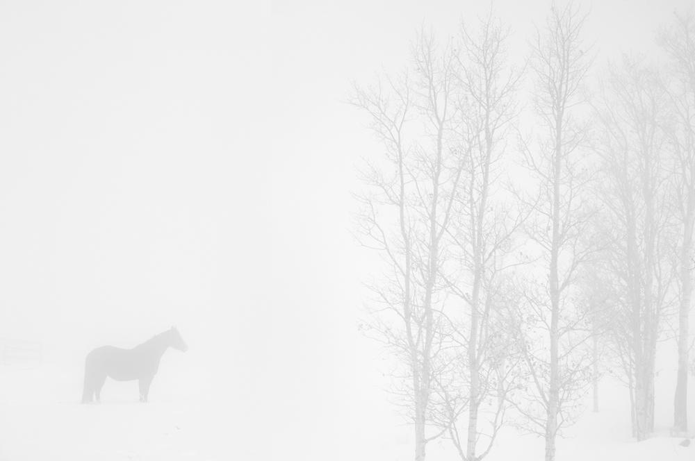Horse&Larch-web.jpg