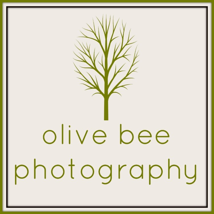 olive bee photography