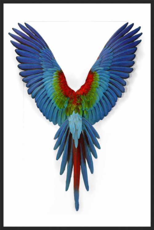 Darby Road HOME'S Exclusive  Green Wing Macaw , available in showroom.