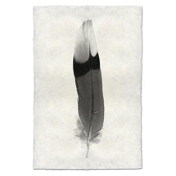 feather_9_grande.jpeg