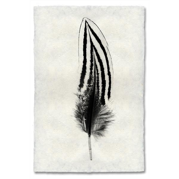feather2_grande.jpg