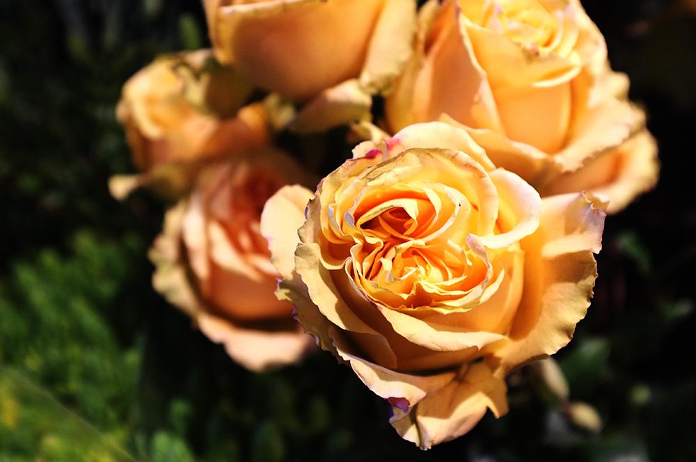 A.P Bloem, Christmas, Florist, Arrangement, Pinecones, Amsterdam, Bloem, Bloemist, Bloemenwinkel, Kerst, Roses