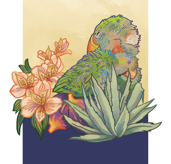 kat-flores-illustration-parrot-home.png