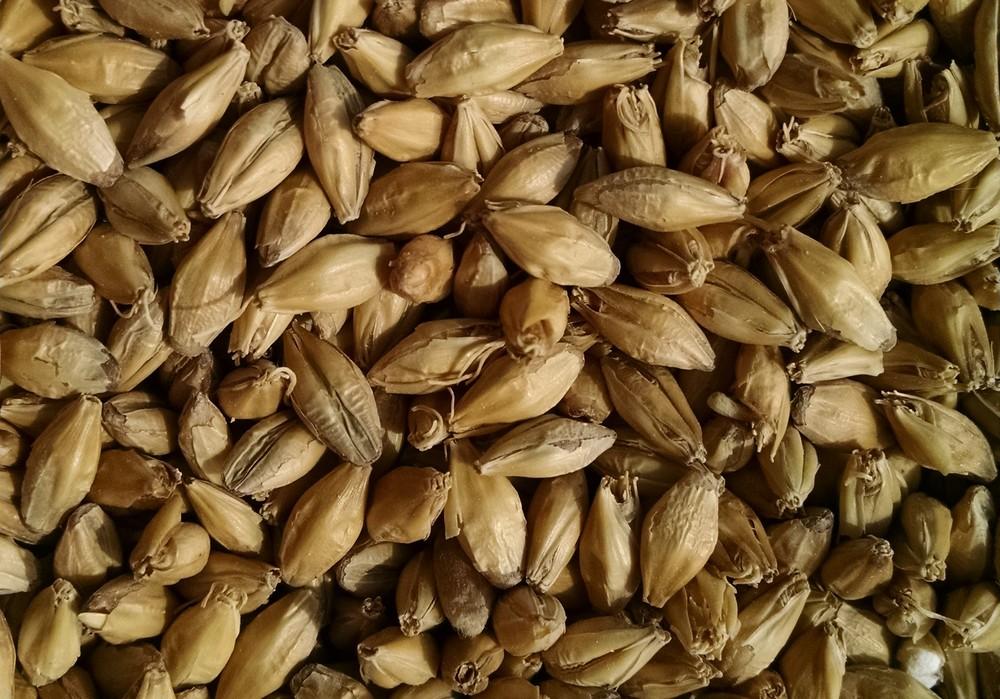 Class malted barley batch (2).jpg
