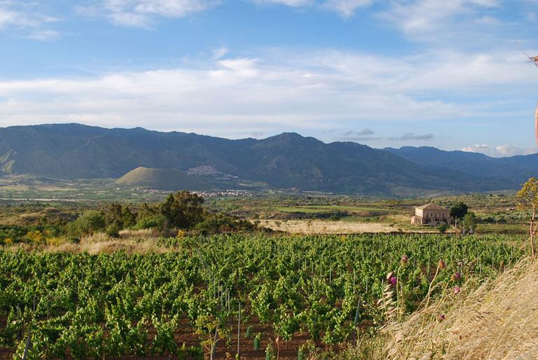 territorio-passopisciaro-vigne-etna3.jpg