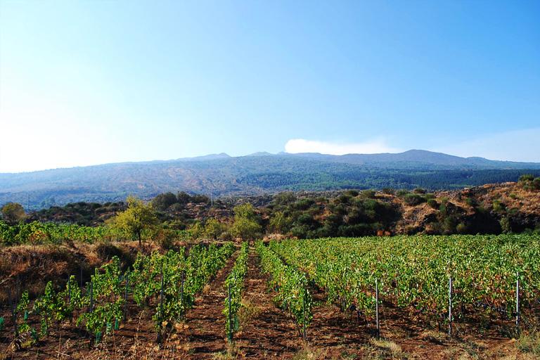territorio-passopisciaro-vigne-etna4.jpg