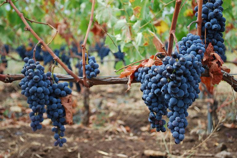 vino-passopisciaro-nerello-mascalese2.jpg