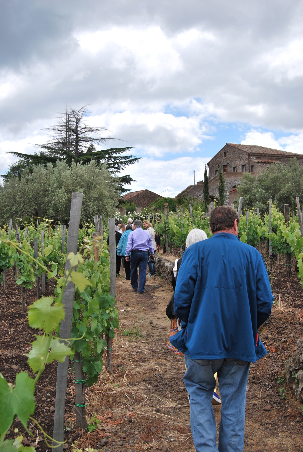 Visit to vineyards and cellars with wine tasting