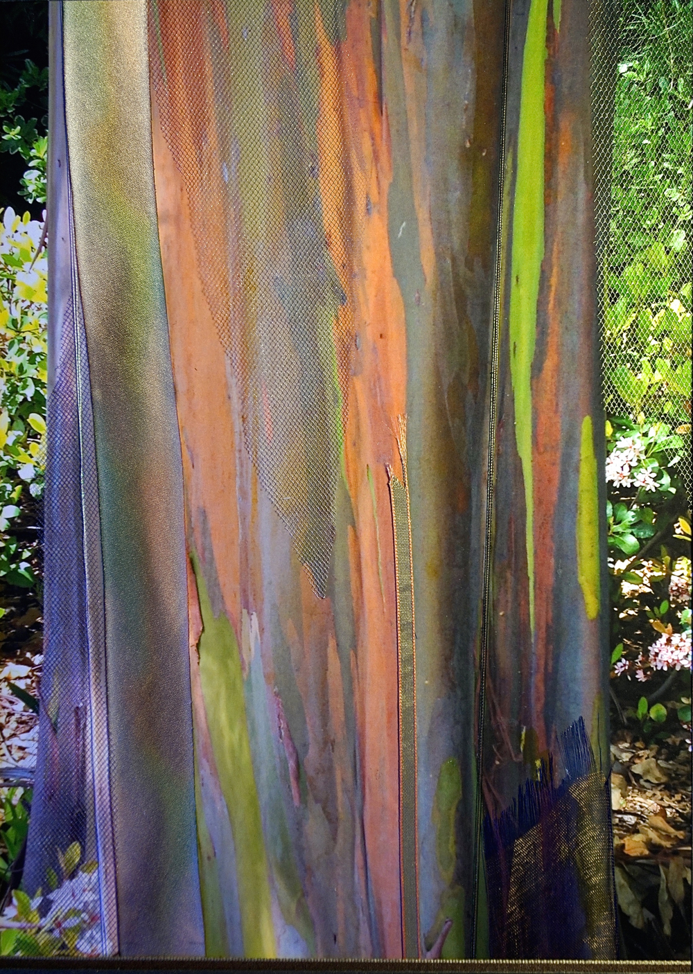 "Nature Interlaced Series    Rainbow Eucalyptus   15"" x 18""   Paper and Silks  2015"