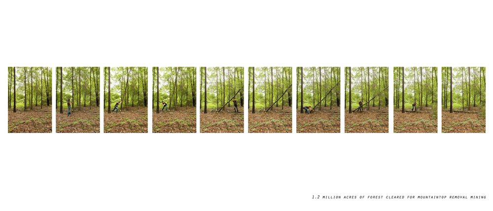 treeclear.jpg