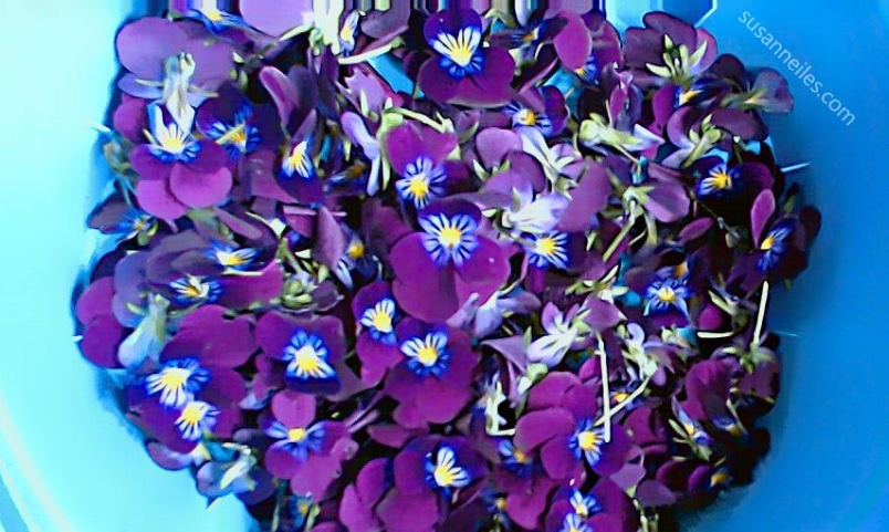Beautiful bowl of violets