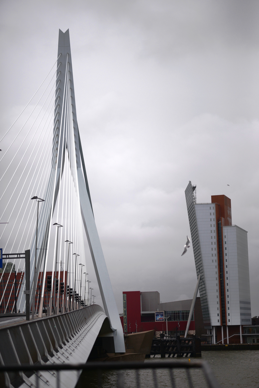 Rotterdam - 03.jpg
