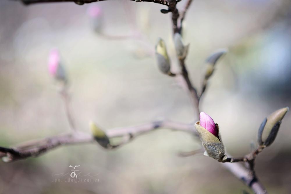 Logo - Flower 01.jpg
