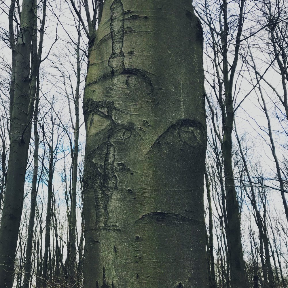 The all-seeing tree.