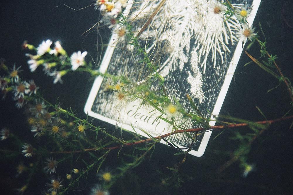 The Wild Unknown Scarpulla 16_025.jpg