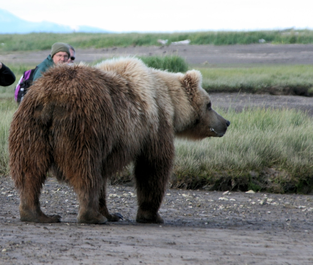 Bear visits a group of Bear viewing clients
