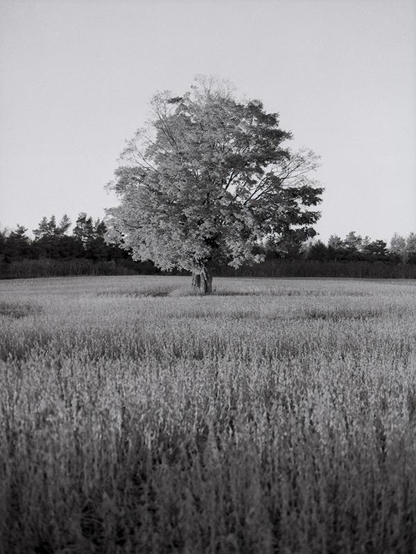 Tree_02_Nov02 SS.jpg