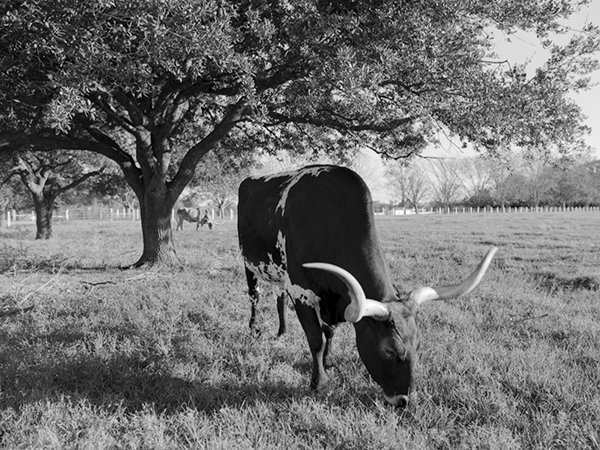 Texas_BW_05 copy.jpg