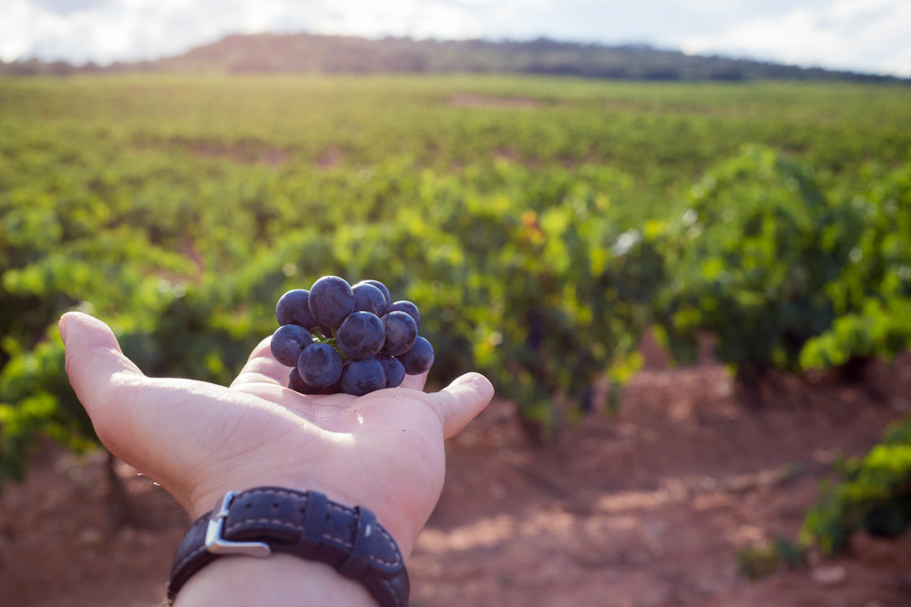 Las mejores uvas