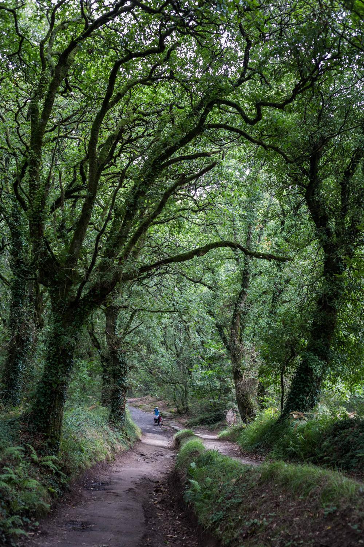 Los profundos bosques gallegos