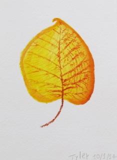 leaf tyler 1.JPG