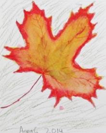 leaf anna.JPG