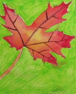 leaf abby.JPG