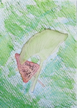 leaf abby k.JPG