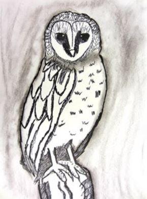 charcoal owl.JPG