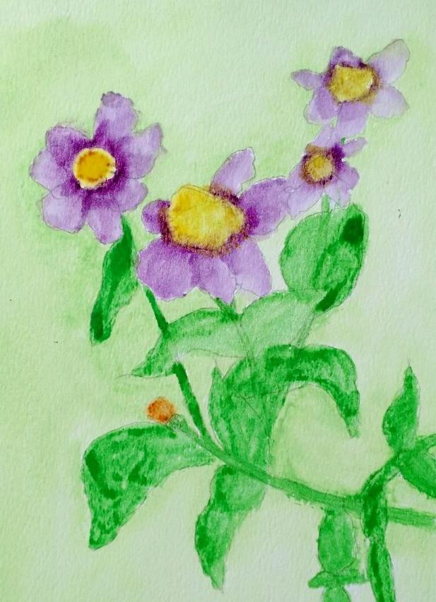 flowers bahra.jpg