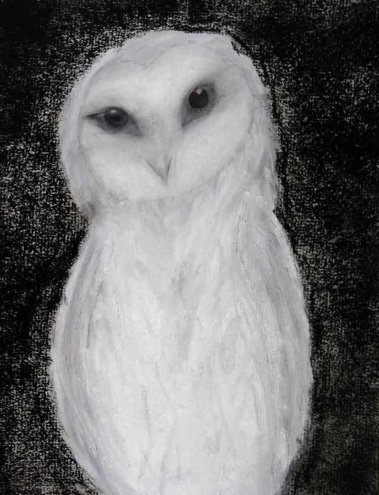 owl bahra.jpg