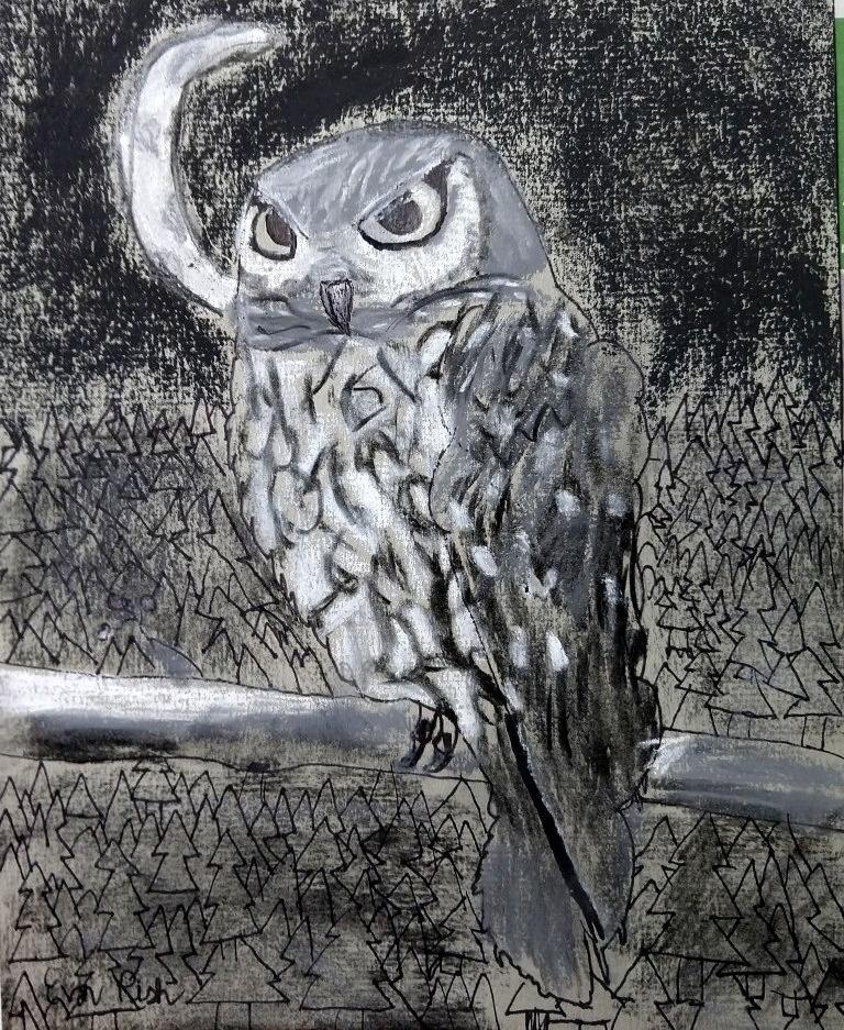 owl evan.jpg